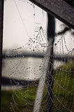 Spiderweb. Beautiful spiderweb with dew drops Stock Image
