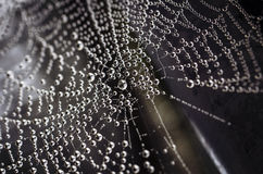 Spiderweb. Beautiful spiderweb with dew drops Stock Photography