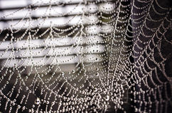 Spiderweb. Beautiful spiderweb with dew drops Stock Photo