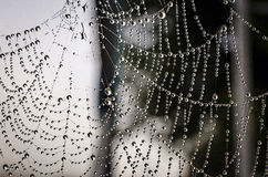 Spiderweb Royalty Free Stock Image