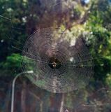 The Spiderweb. The beautiful and stunning of this Spiderweb Stock Image