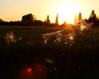 Spiderweb 002. A really beautyful lanscape scene with trees in the sun royalty free stock images