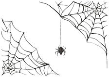 Spiderweb. Big black spider web. Black scary spider of web. Poison spider Royalty Free Stock Photos