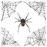 Spiderweb. Big spider web. Scary spider of web. Poison spider Royalty Free Stock Photos