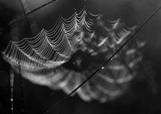 Spiderweb black white Royalty Free Stock Photography