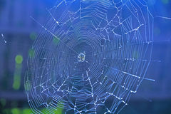 Spiderweb on blue background Royalty Free Stock Photo