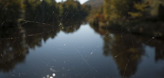 Spiderweb with blured nature background Stock Photography