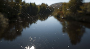 Spiderweb with blured nature background in fall Royalty Free Stock Photos