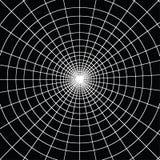 Spiderweb branco O trabalho de surpresa podia ser bom para o fundo ilustração stock
