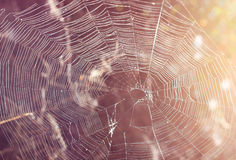 Spiderweb close up. Abstract background with cobweb close-up Royalty Free Stock Photography