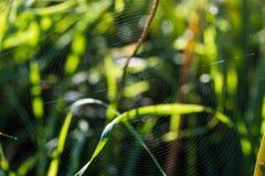 Spiderweb close-up Stock Photography