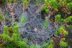Spiderweb. Closeup of a spiderweb on a foggy day (Hamningberg, Norway&#x29 Royalty Free Stock Photos