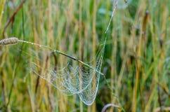 Spiderweb com gotas da manhã dew3 Fotos de Stock Royalty Free