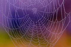 Spiderweb com gotas de orvalho imagens de stock royalty free