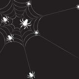 Spiderweb con i ragni Immagini Stock Libere da Diritti