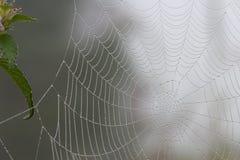 Spiderweb con las gotitas del rocío Imagen de archivo