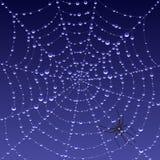 Spiderweb con rocío ilustración del vector