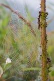 Spiderweb con rocío por la mañana Foto de archivo