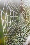 Spiderweb con rocío por la mañana Foto de archivo libre de regalías