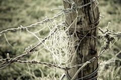 Spiderweb congelado y alambre de púas en un tronco de madera Imagen de archivo libre de regalías