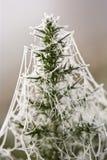 Spiderweb congelato sul gorse Immagini Stock Libere da Diritti