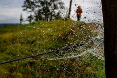 Spiderweb covered in dew drops. Along a misty hilltop in Waitomo, Waikato, New Zealand Royalty Free Stock Images
