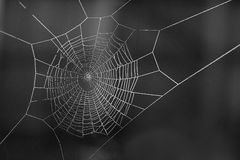 Spiderweb covered in dew Stock Image