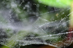 Spiderweb covered by water droplets Royalty Free Stock Photo