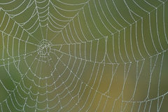 Spiderweb de matin Images libres de droits