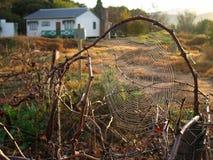 Spiderweb del país fotos de archivo