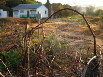 Spiderweb del paese Fotografie Stock