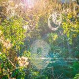 Spiderweb in der Sonne stockbild