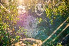Spiderweb in der Sonne stockfotografie