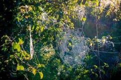 Spiderweb in der Sonne lizenzfreie stockfotografie