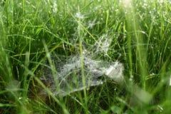 Spiderweb in der Sonne stockbilder