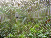Spiderweb in der Wiese Stockfoto