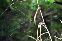 Spiderweb details with spider Stock Photo