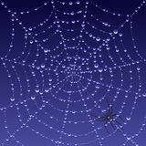 Spiderweb with dew. Vector illustration of a dew covered spiderweb at dawn Royalty Free Stock Photo