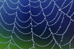 Spiderweb with dew drops Stock Photo