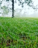 Spiderweb with dew Stock Photography