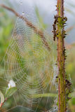 Spiderweb with dew in the morning Stock Photo