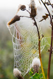 Spiderweb with dew in the morning Stock Images
