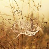 Spiderweb and dew. Autumn photo Royalty Free Stock Photography