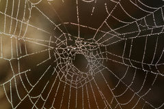 Spiderweb with dewdrops Stock Images