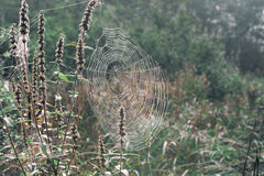 Spiderweb on the dried herbs Royalty Free Stock Photography