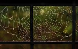 Spiderweb in drops of dew. In a metallic frame Royalty Free Stock Image