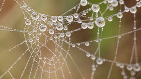 Spiderweb with drops at the morning stock video