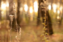 Spiderweb on the dry grass in back light Stock Photo