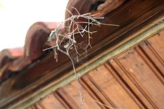 Spiderweb on a dry twig. A spiderweb on a dry twig in front of a brown wooden ceilling stock photography
