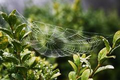 Spiderweb. Early in the morning Royalty Free Stock Images